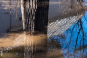 #reflection, #tree #water #abstract #abstractphotography